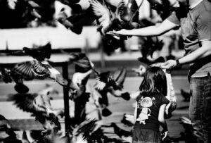 pigeons in public square