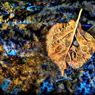 Wishing Leaf
