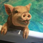 Swimming Pig