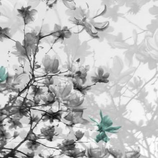 The Fullest Bloom Black, White  & Tiffany Blue