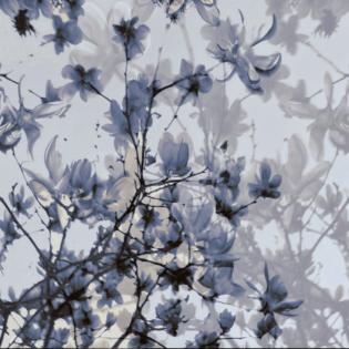 The Fullest Bloom in Lavender