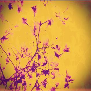 Sunrise Blooms